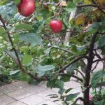 vruchten aan de bomen pientere peuters